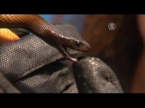 Мальчик выжил после укуса самой ядовитой змеи