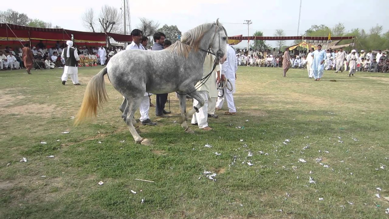 Pakistan Horse - Year of Clean Water