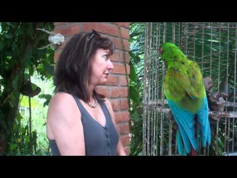 Funniest Parrot Video Ever