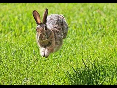 Bunny Run Online Spielen