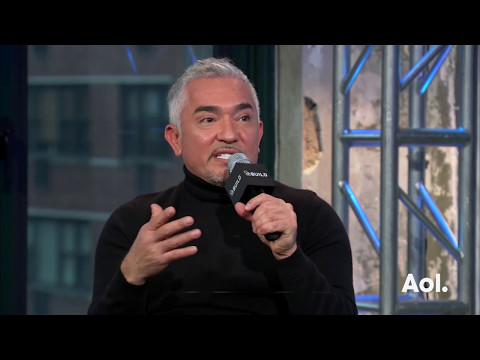 "Cesar Milan On ""Cesar 911"" | AOL BUILD"