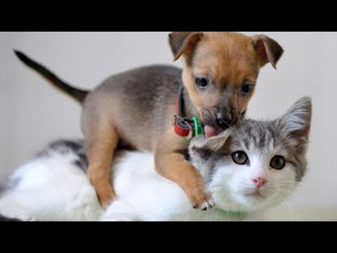 Cats and Dogs will make your day easier after hard work! - Funny and Cute compilation