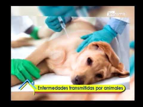 Enfermedades transmitidas por animales