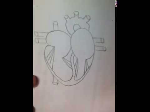 Easy way to draw heart diagram youtube easy way to draw heart diagram ccuart Images