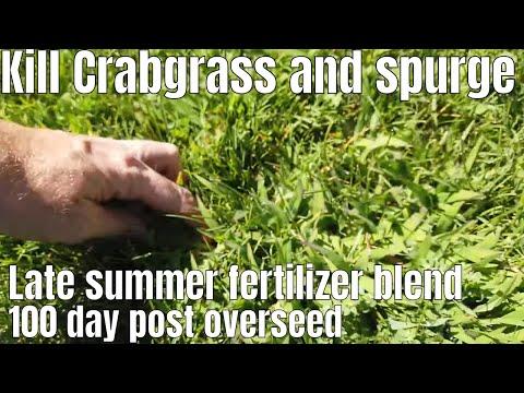 diy-how-to-treat-lawn-after-overseed.-lawn-recovery,-fertilizer-and-kill-crabgrass-and-spurge