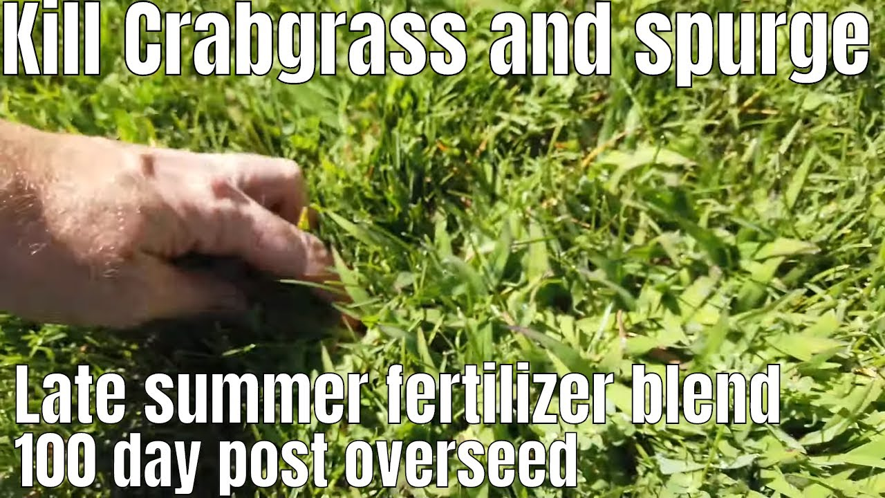 how to treat crab grass