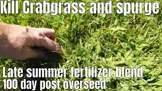DIY How to treat lawn after overseed. Lawn recovery, fertilizer and kill crabgrass and spurge