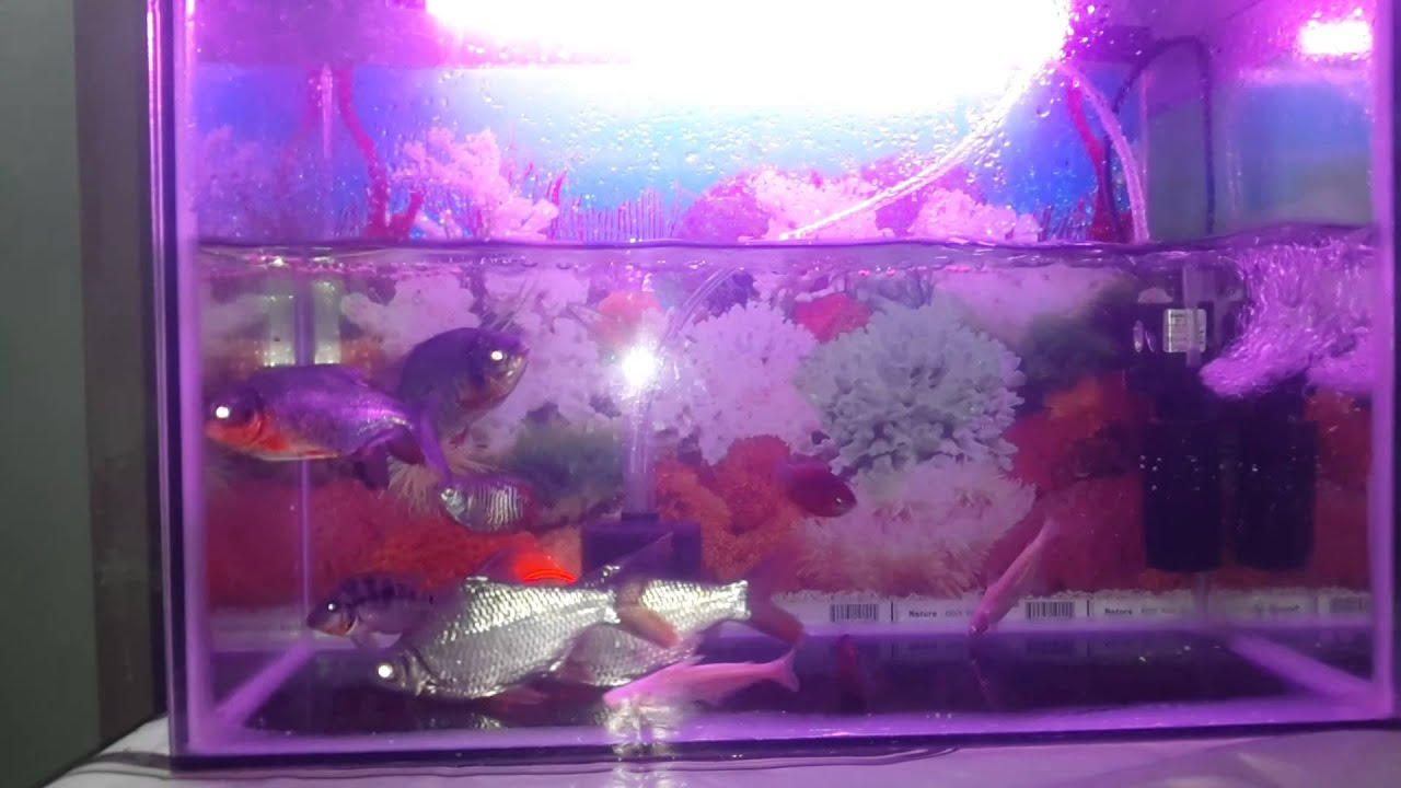 Javed fish tank at kurla youtube for Used fish tanks for sale many sizes