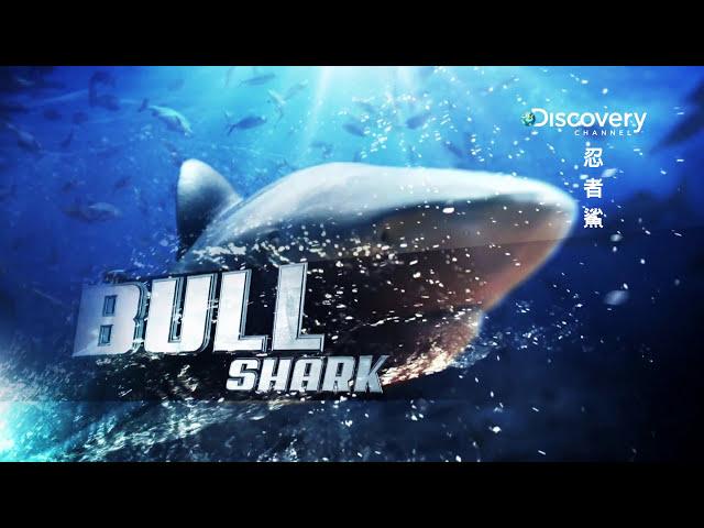Discovery忍者鯊 007公牛鯊牠是鯊魚界的變形者 HD MP4檔