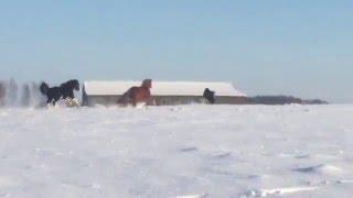 Academy Vitality, Horses in winter