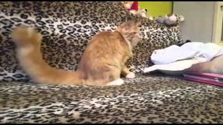 Casper кот мейн кун отзыв