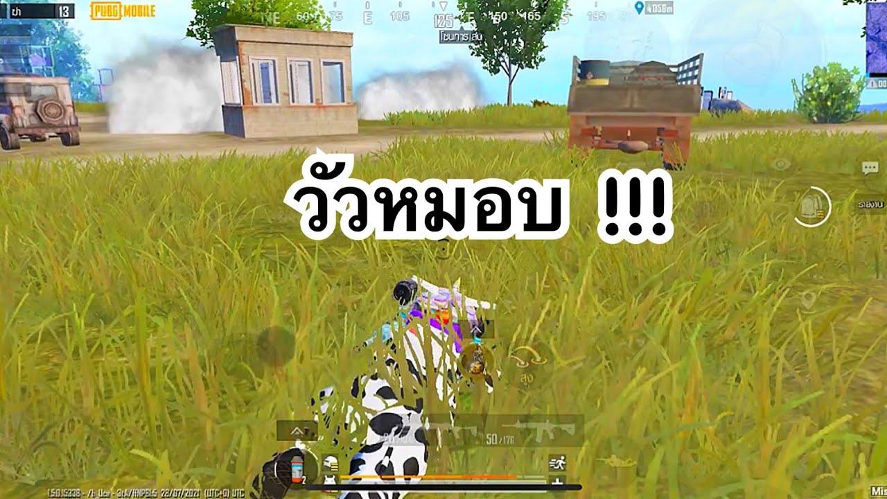 PUBG MOBILE : วัวหมอบ !!!
