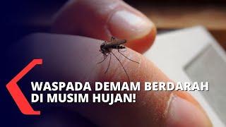 Program News Sulteng Update Palu Tv Perekat Budaya Sulawesi Tengah , by Rangga Musabar..
