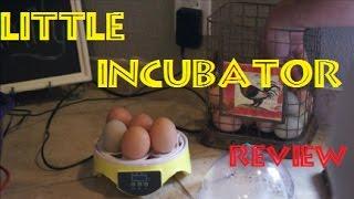 7 Egg Incubator Review thumbnail