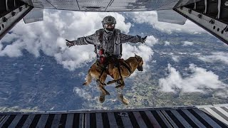 The 10 Bravest Dogs in History