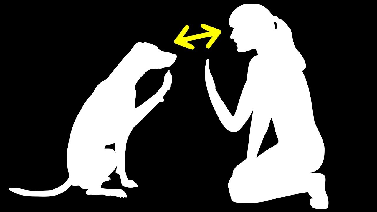 6 доказательств того, что собаки очень похожи на людей