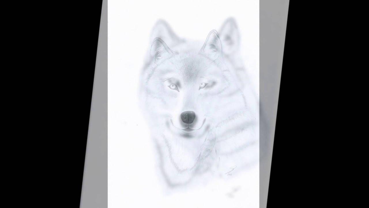 Vlk Youtube