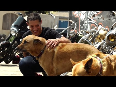 Join Theo Rossi in Becoming an HSI Street Dog Defender Today