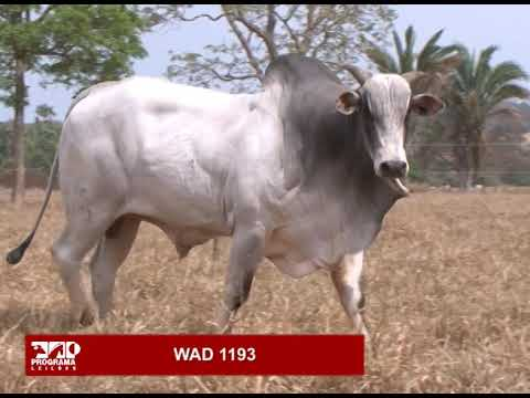 LOTE 02 - WAD 1193