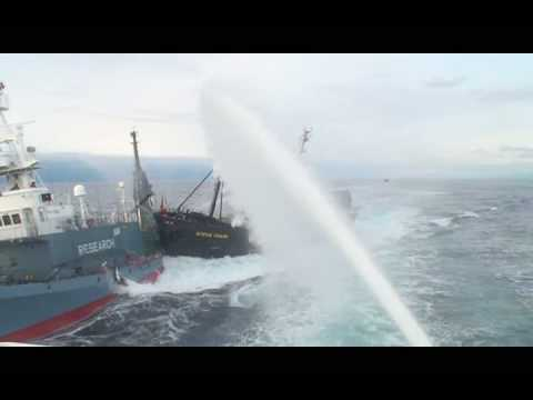 SSCS vessel Steve Irwin rams dangerously Japanese research ship Yushin Maru No3