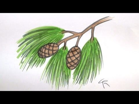 Learn How To Draw a Pine Branch, Needles, and Cones -- iCanHazDraw!