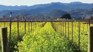 Napa Valley Living with Terra Firma Global Partners