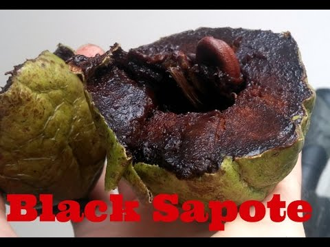 Chocolate Pudding Fruit Review (Black Sapote) - Weird Fruit Explorer Ep. 129
