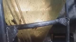 Инкубация икры и выклев личинки клариевого/африканского сома