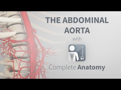 The Abdominal Aorta | Complete Anatomy