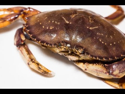 How To Humanely Kill  Crab