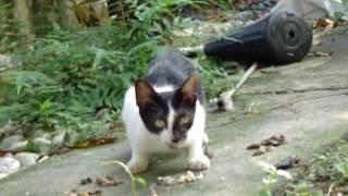 院子裡的貓