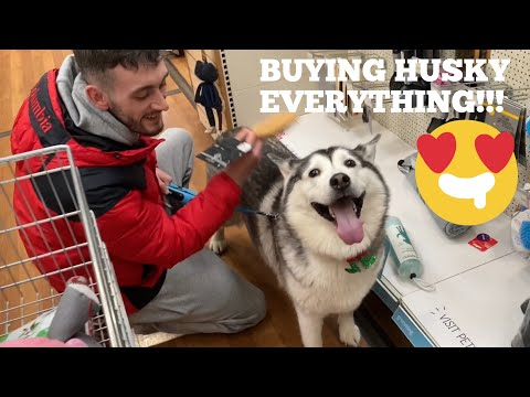 Buying EVERYTHING My Huskies Touches For Her Birthday!