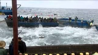 السلسلة الوثائقية محطات بحرية صيد سمك التونة larache insolite la peche au thon