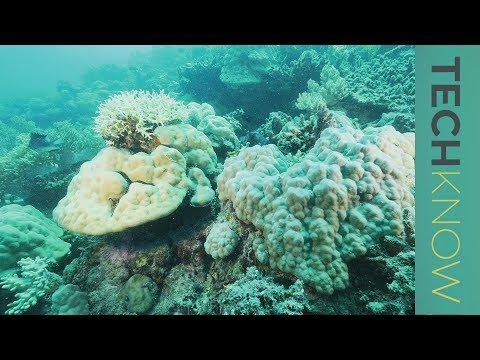 Saving the coral reef   TechKnow