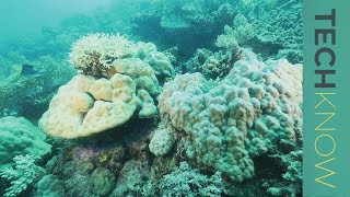 Saving the coral reef | TechKnow