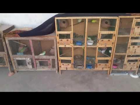 Parrots separate cages