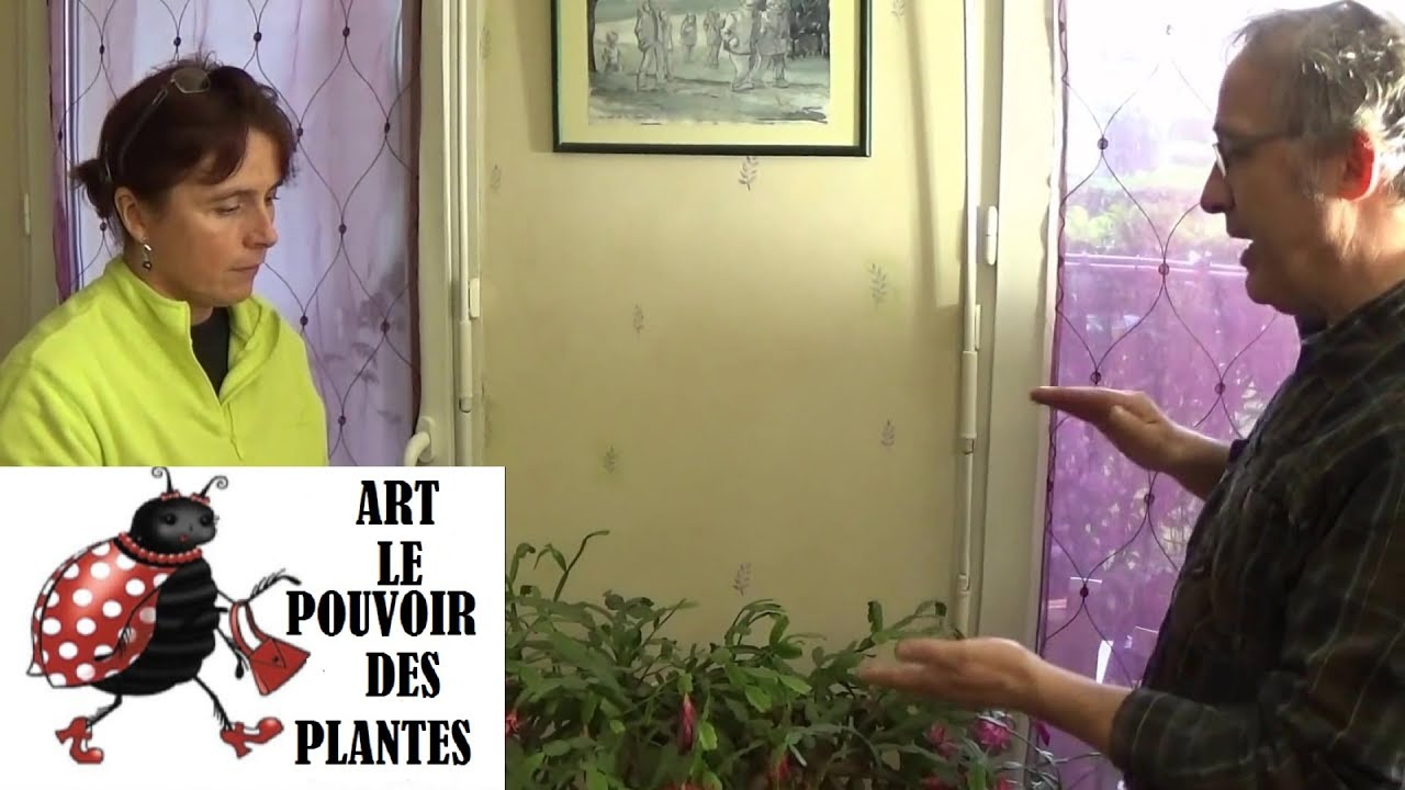 chaine de jardin comment bouturer un schlumbergera cactus de no l plante verte. Black Bedroom Furniture Sets. Home Design Ideas
