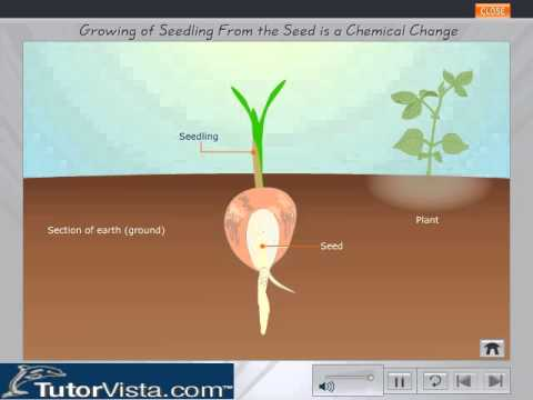 Growing Of Seedling From The Seed Is A Chemical Change Youtube