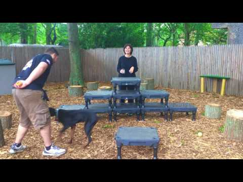 Long Island Dog Trainer: Rottweiler Learning Watch Command-Best Dog Trainers in NY
