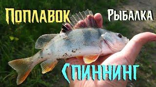 Рыбалка рыбное ассорти Гоняю окуней и плотву в середине осени