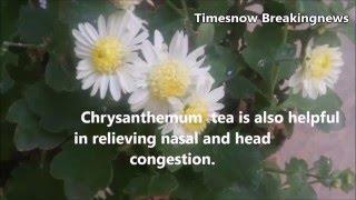 Health Benefits of Chrysanthemum | health tips, health care, In English - TimesNow BreakingNews
