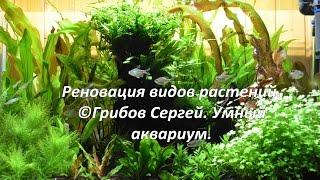 Реновация видов растений. Аквариум 270л. (длинное видео)