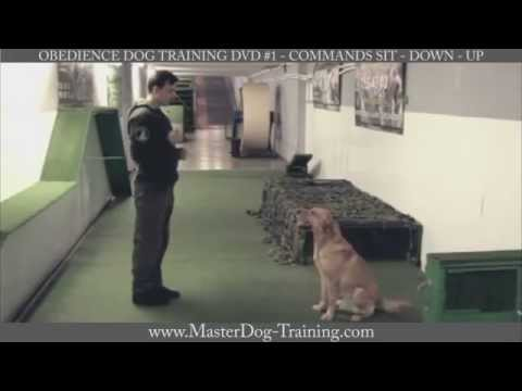 obedience-dog-training-dvd-#1---commands:-sit---down---up
