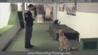 Obedience Dog Training Dvd #1 - Commands: Sit - Down - Up