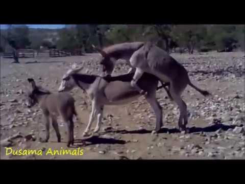 Fantastic! A Girl and A Horse - Lovely smart girl Playing Horse On Rice Fields from YouTube · Duration:  4 minutes 43 seconds