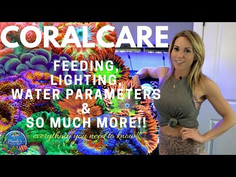 Coral Care - Feeding, Lighting, Reef Parameters & More! - Mindi's Coral Reef