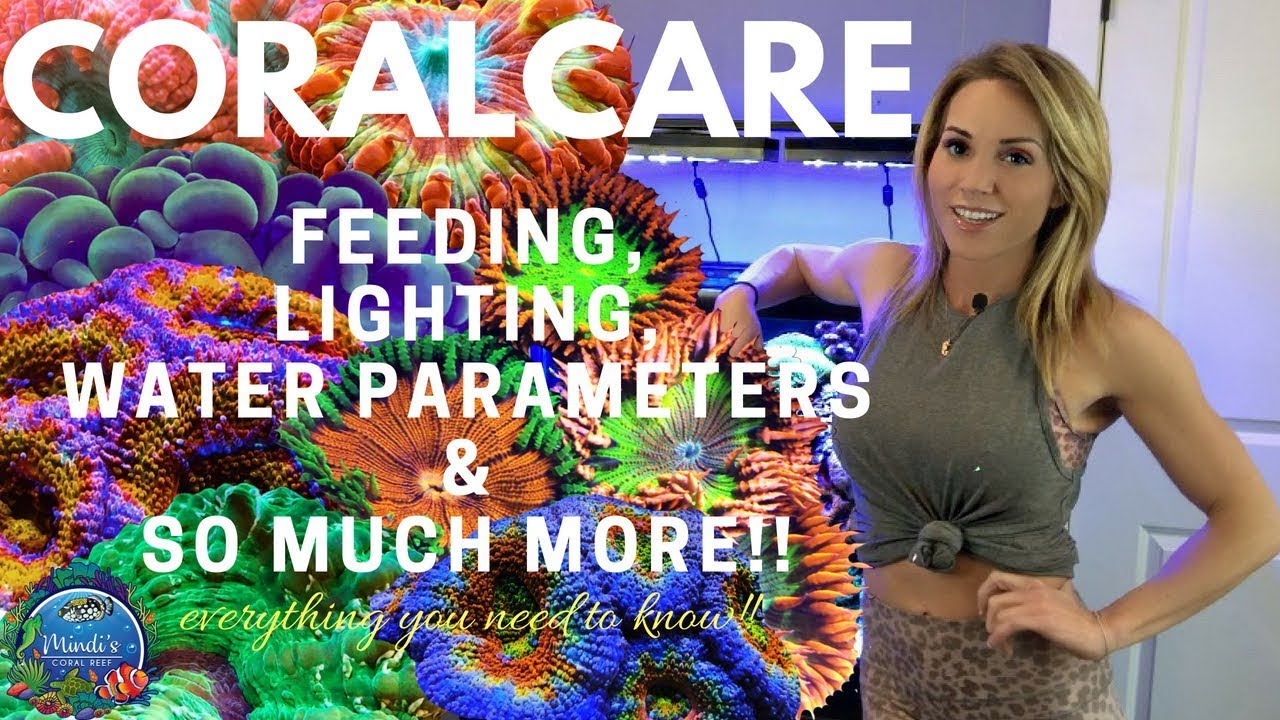 Fish Coral Care - Feeding, Lighting, Reef Parameters & More! - Mindi's Coral Reef