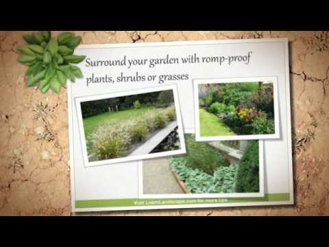 backyard landscaping ideas for dogs youtube