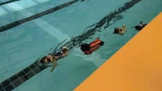 ぶんぶん、おまめ、ちょび、こむぎの仲良し水泳大会です➰ 暑い夏、涼し...