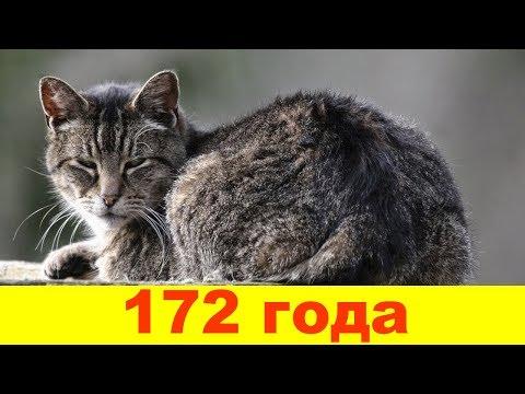 10 самых старых кошек в мире